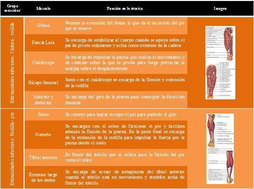 Tabla función músculos