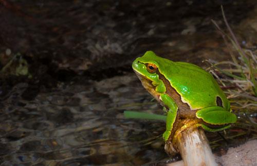 Las ranas | Rincon del do