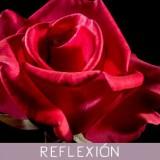 La rosa y la inutilidad de las palabras