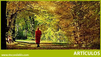 El gran bosque y el bello jardín.