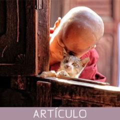 Los mejores proverbios budistas para educar a niños felices