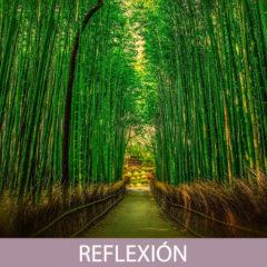Reflexión sobre El Bambú Japonés